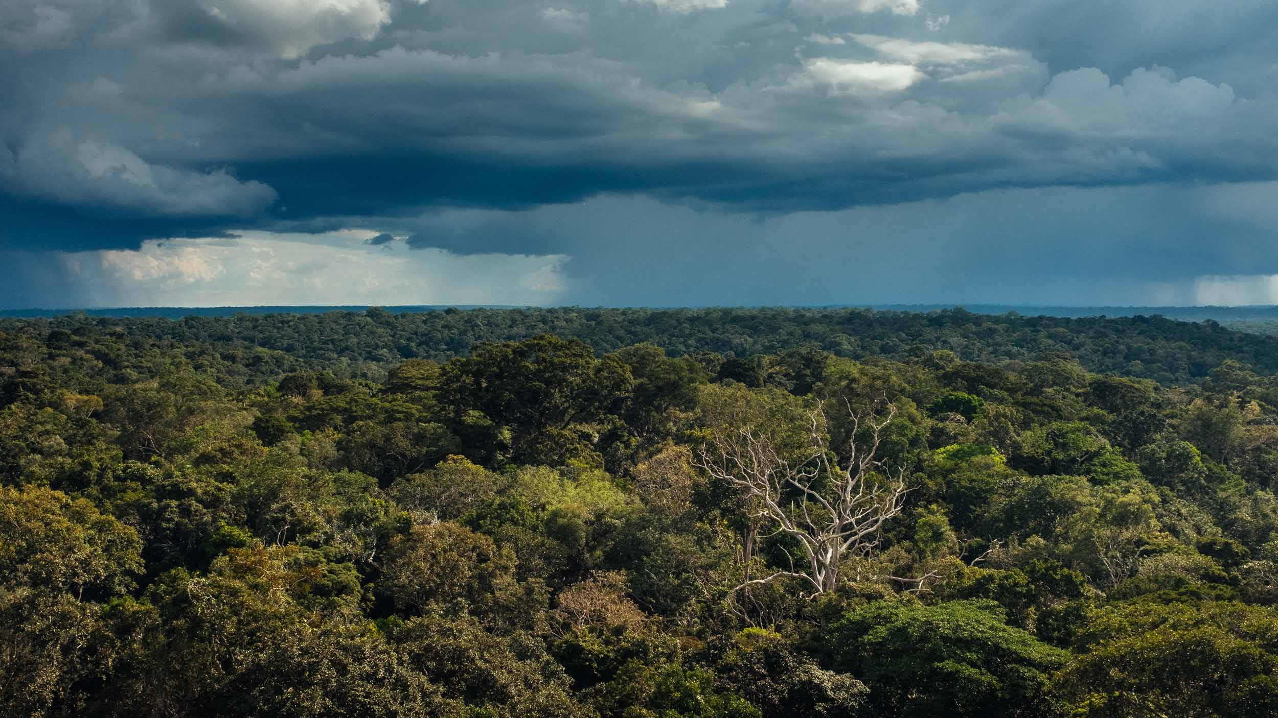 The Amazon Used To Be A Hedge Against Climate Change