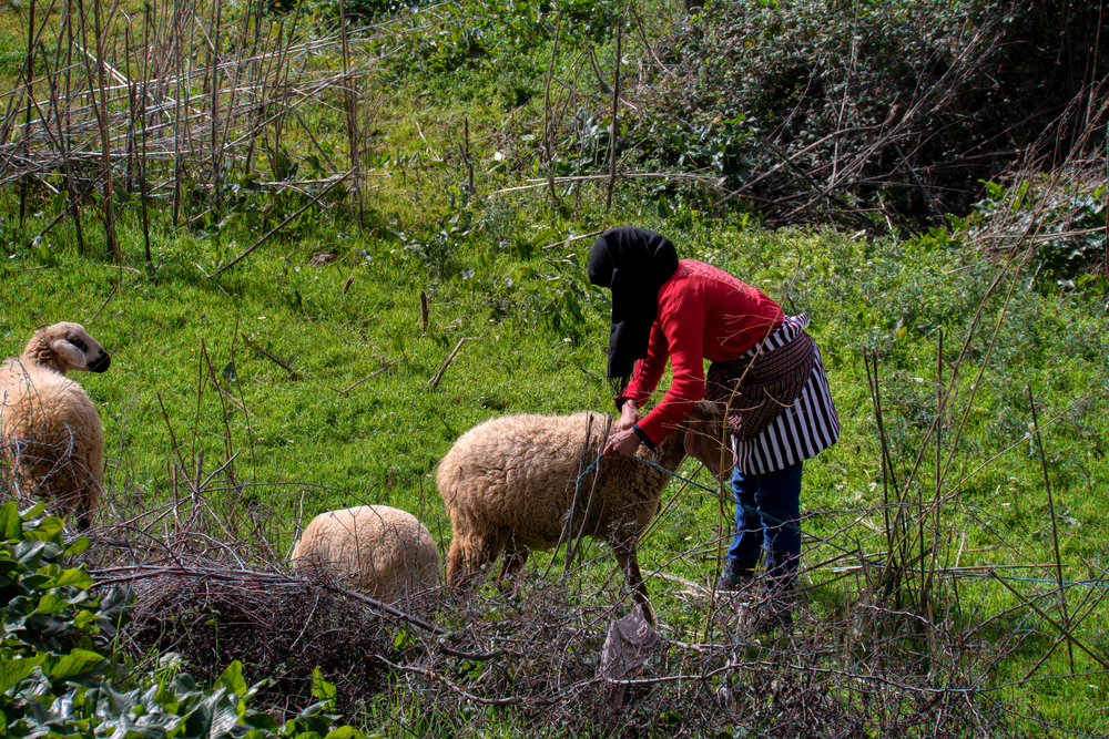 Photo of Women Agricultural Workers in Morocco Speak Out | Pulitzer Center on Crisis Reporting