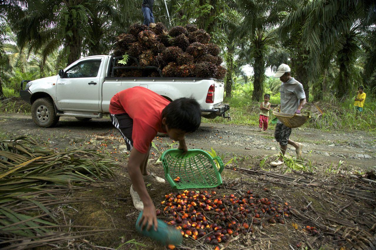 Stateless Children In Borneo S Palm Oil Industry
