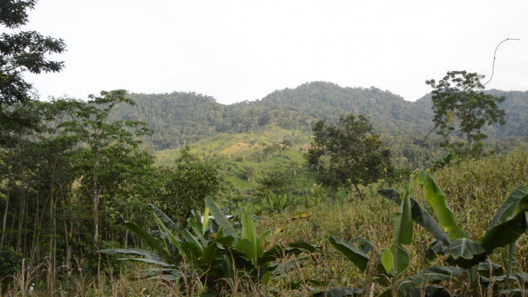 A diversity of vegetation inside Meru Betiri National Park, with trees, grass, and bushes.