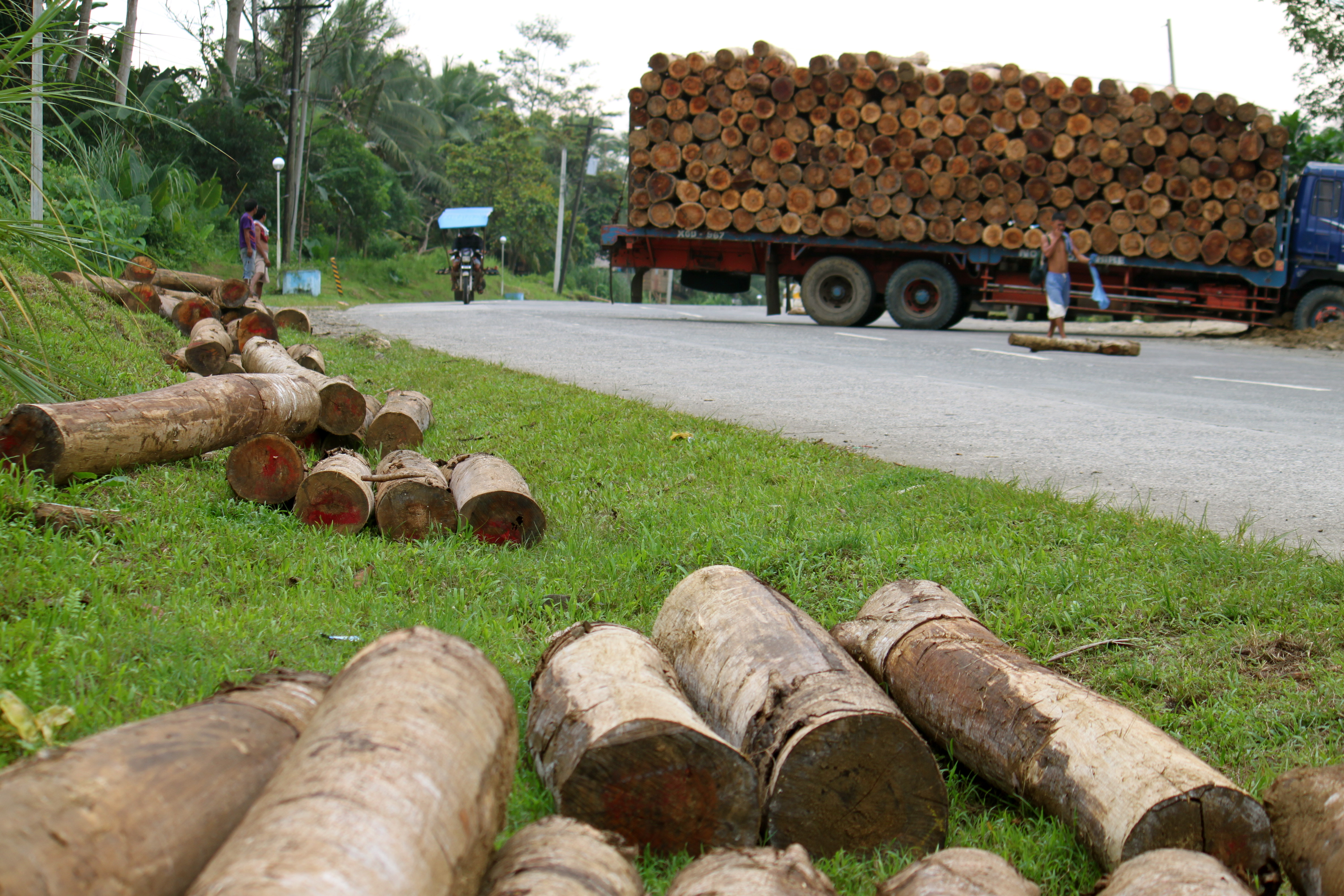 Philippines: Timber Hauling for a Living | Pulitzer Center