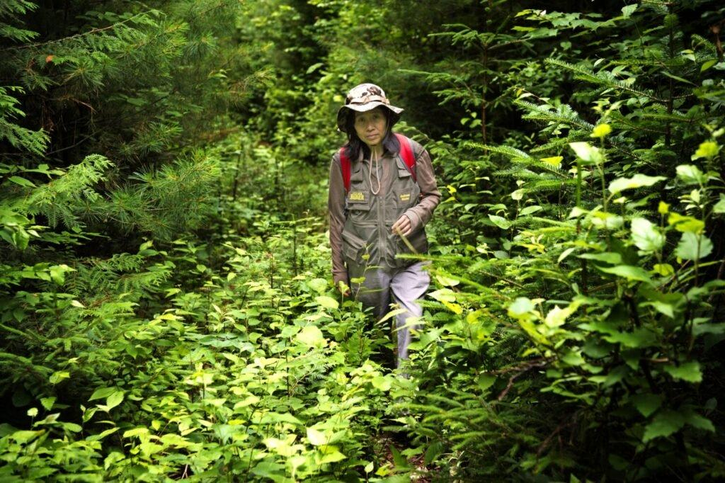 Sally Kwan hikes through what once was a logging road but now filled with young growth forest in T5 R7 in the Unorganized Territories of western Maine wilderness near the border with Canada on July 22, 2019. Image by Michael G. Seamans. United States, 2019.