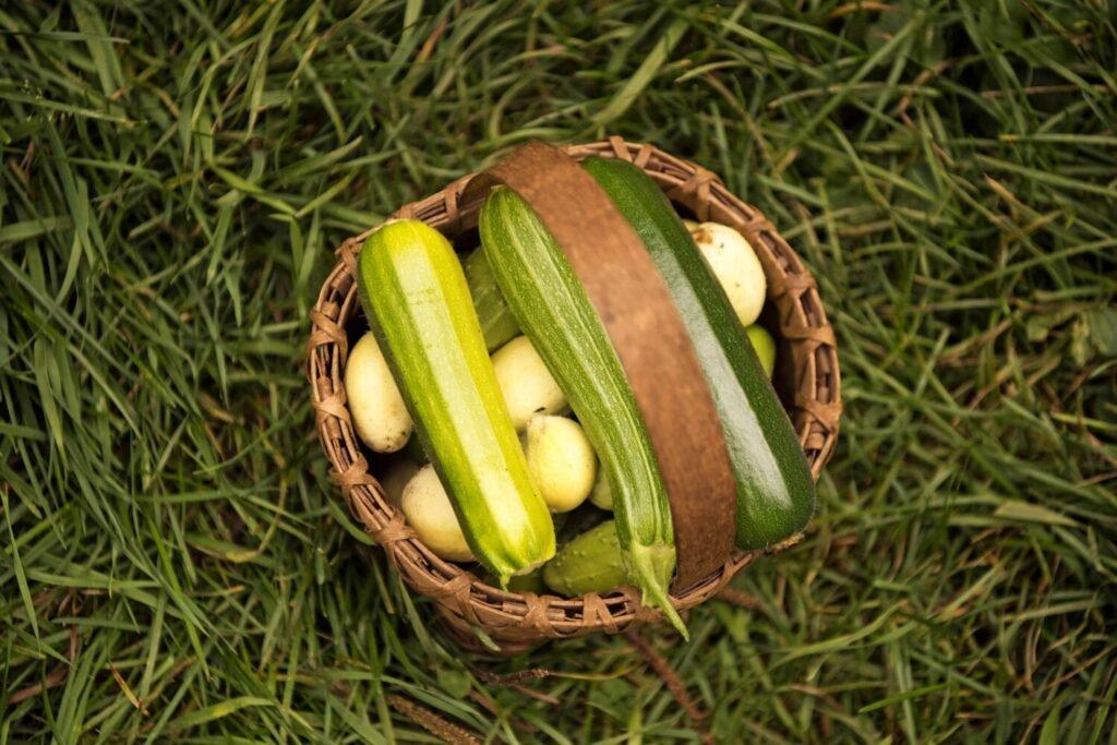 Cucumbers and squash sit in a homemade basket at the Hanson/Kwan homestead in T5 R7 in the Unorganized Territories on Sept. 17, 2019. Image by Michael G. Seamans. United States, 2019.
