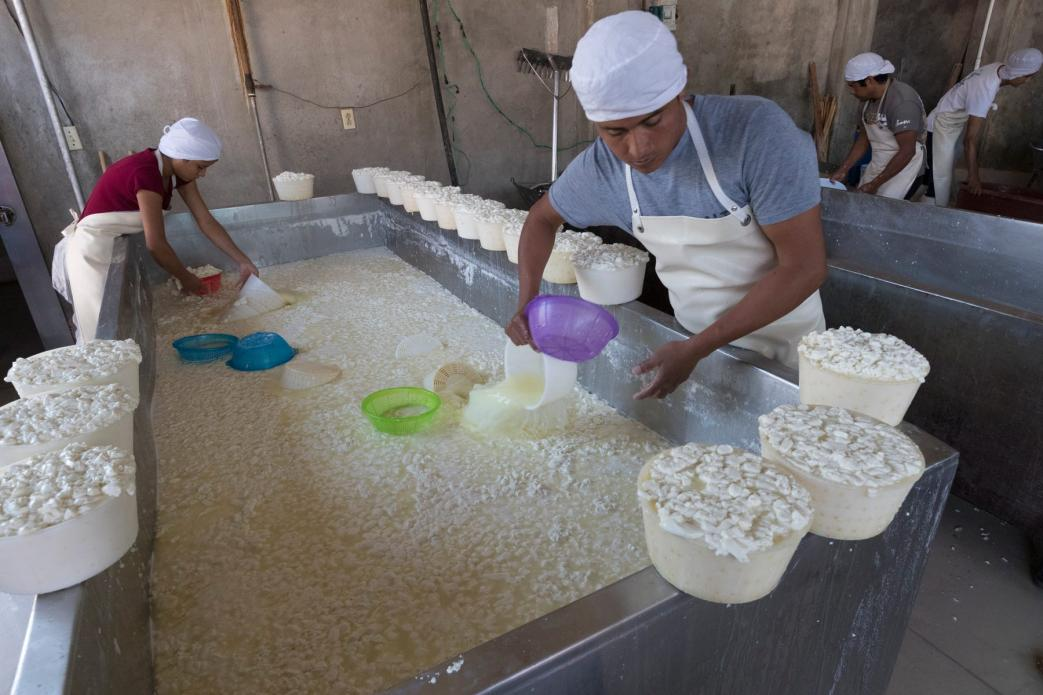 Workers fill tubs with fresh curds at a small dairy plant owned by Alvaro Gonzalez and his brother in Tizayuca, Mexico. The business employs 15 people who make cream and yogurt. Image by Mark Hoffman. Mexico, 2019.