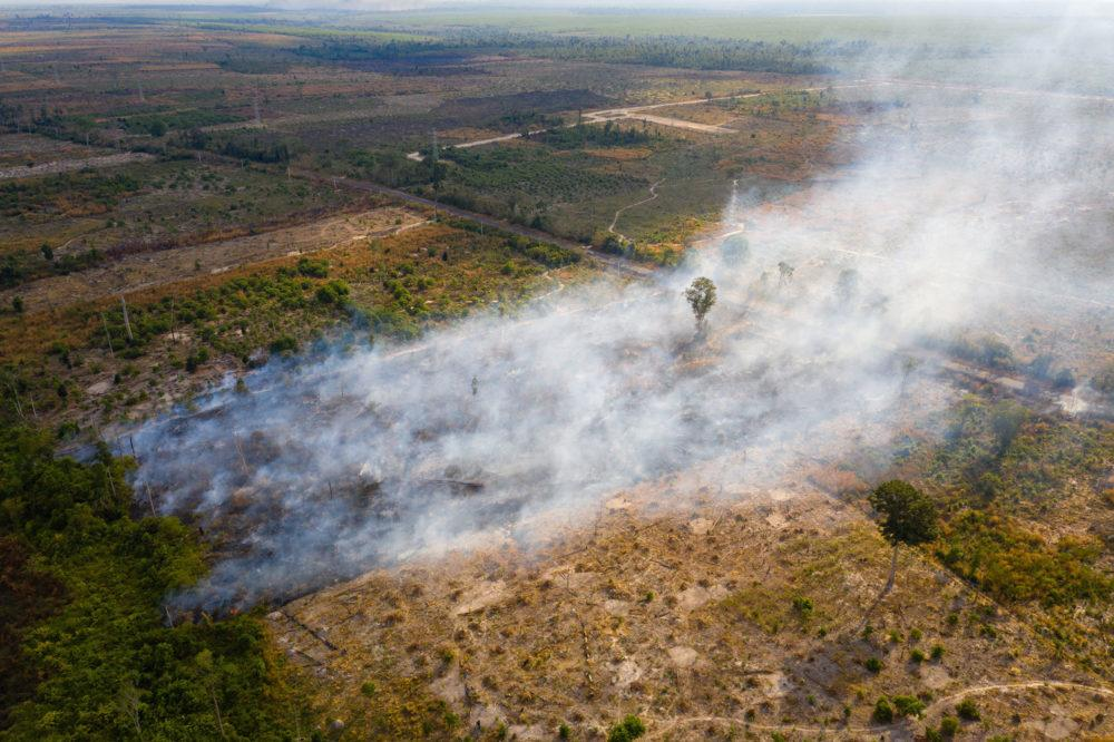 A burning field in the Beng Per Wildlife Sanctuary, in northern Cambodia. Beng Per is a sanctuary in name only as most of the land has been sold by the government for agricultural concessions and rubber plantations. Image by Sean Gallagher. Cambodia, 2020.<br />