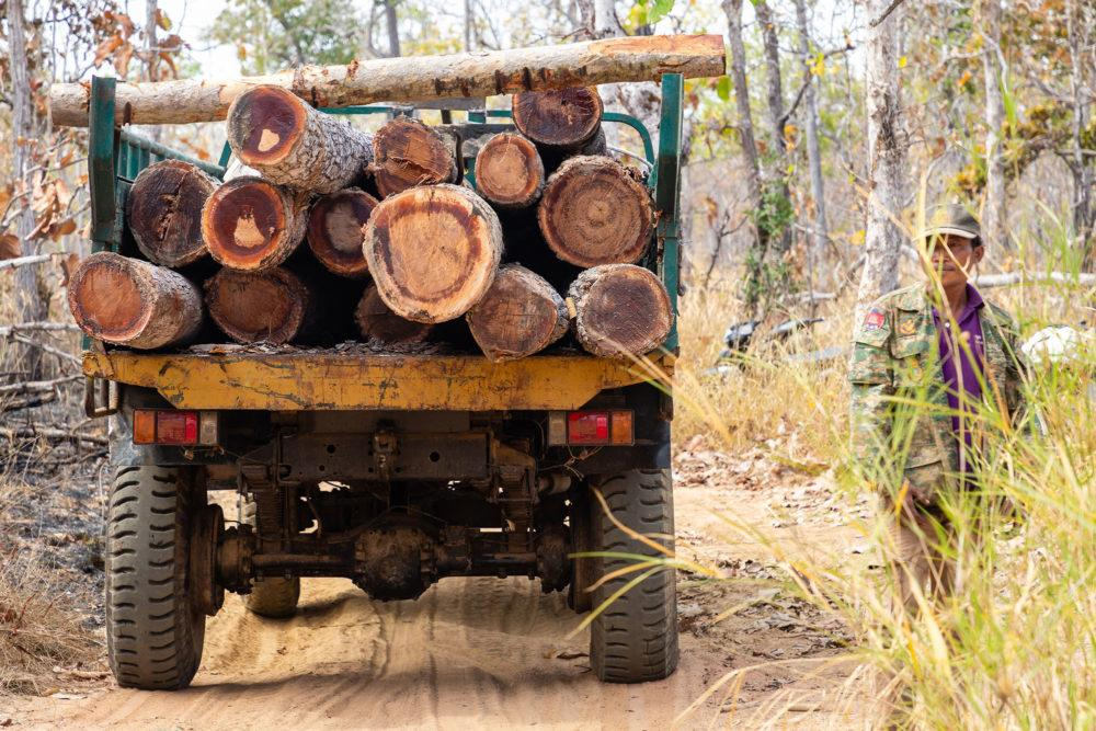 A member of the Prey Lang Community Rangers alongside a truck hauling timber from a protected forest area. Rangers do not have the authority to confiscate illegally harvested logs, but they monitor and report on such activity. Image by Sean Gallagher. Cambodia, 2020.
