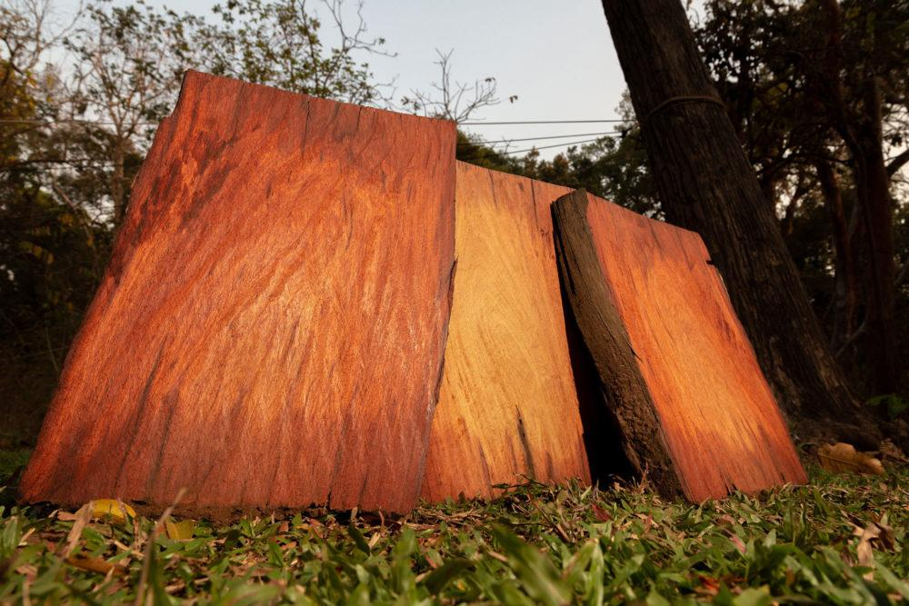 Confiscated rosewood in the Phnom Tnout Phnom Pok Wildlife Sanctuary. The trade in rosewood, prized for high-end furniture in China, is outlawed througout the world, but a network of corrupt Cambodian businessmen and officials is engaged in a lucrative, black-market rosewood trade. Image by Sean Gallagher. Cambodia, 2020.</p> <p>