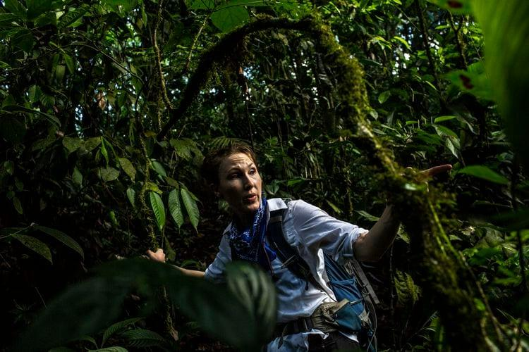 Fiona Soper, a McGill University biology professor, walks amid thick vegetation while assessing the plant species near Rincón de la Vieja. Image by Dado Galdieri / Hilaea Media. Costa Rica, 2020.