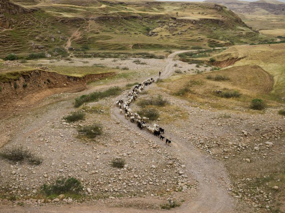 rought in Sikvand village in Khuzestan Province has forced shepherds to move their flocks in search of grassland. Many nomadic families are seeking a way of life that will allow their children to go to school. Image by Newsha Tavakolian. Iran, 2018.