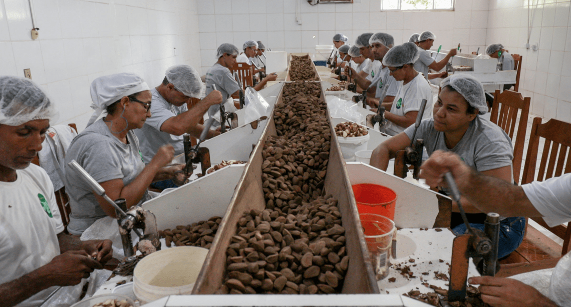 COOPAVAM's nut cracking room is the first stop for Brazil nuts at the new processing factory. Image by Sam Eaton. Brazil, 2018.