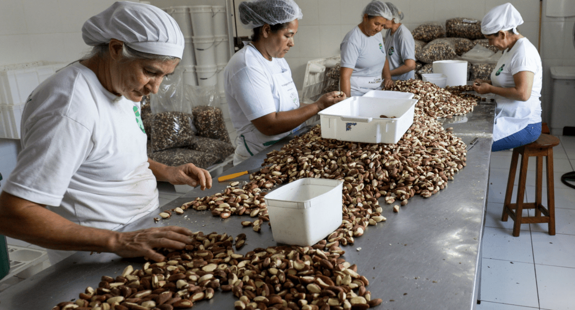The nuts are then sorted and bagged. Image by Sam Eaton. Brazil, 2018.