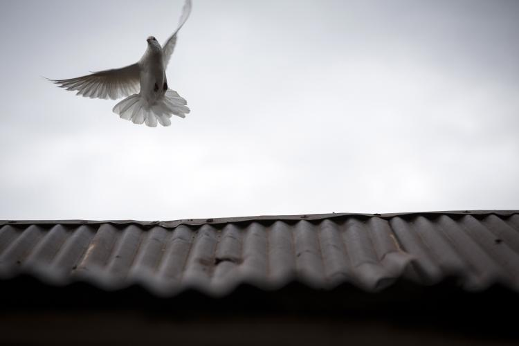 A dove flies from the roof of a shop in Piñalito near Vista Hermosa, Meta, Colombia on Thursday, March 8, 2018. Image by Greg Kendall-Ball. Colombia, 2018.