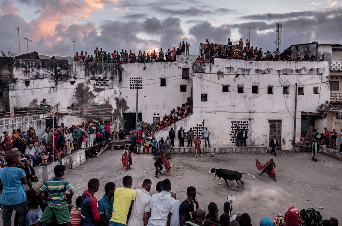 A bullfight known as the tam-tam de boeuf, part of wedding celebrations at the sultan's palace in Domoni. Image by Tommy Trenchard. Comoros, 2019.
