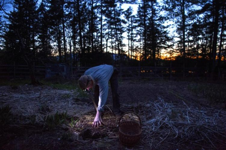 Duane Hanson harvests some garlic for dinner at his homestead in the Unorganized Territories in the north woods of Maine near T5 R7 on May 27, 2019. Image by Michael G. Seamans. United States, 2019.