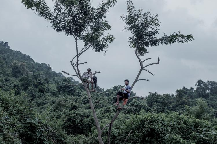 Cowherds wait atop trees along a road between villages. Image by Arko Datto. India, 2018.