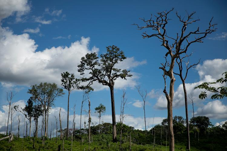 Trees that escaped clearcutting in the forest in Anapu. Image by Spenser Heaps. Brazil, 2019.