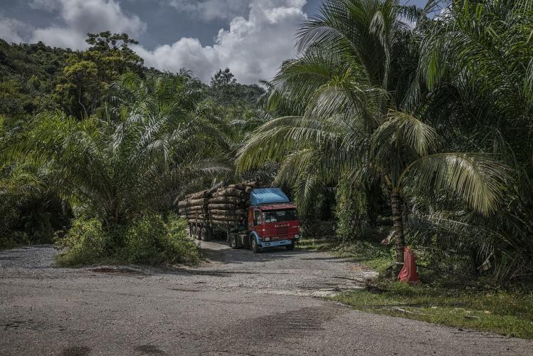 A logging truck exits the rainforest. There seems to be no place for hunter-gatherers such as the Batek along the path Malaysia is blazing into the future. Image by James Whitlow Delano. Malaysia, 2019.