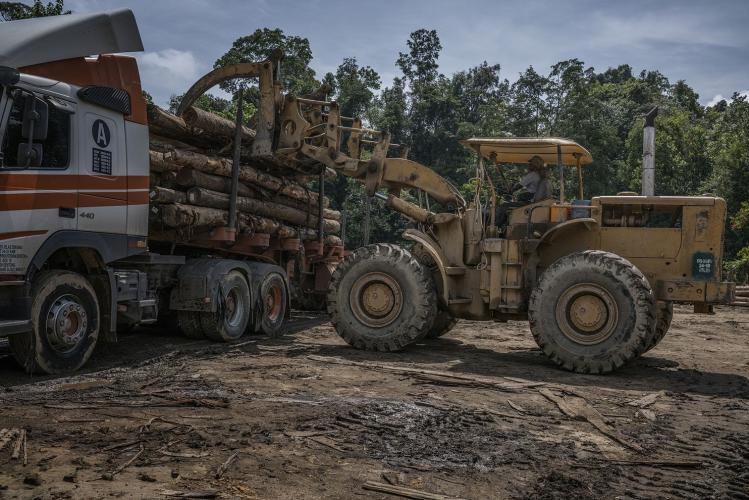 Licensed logging continues on the fringes of Gunung Rabong forest reserve and Taman Negara National Park as a front loader puts logs onto a logging truck to be brought to a sawmill. Image by James Whitlow Delano. Malaysia, 2019.