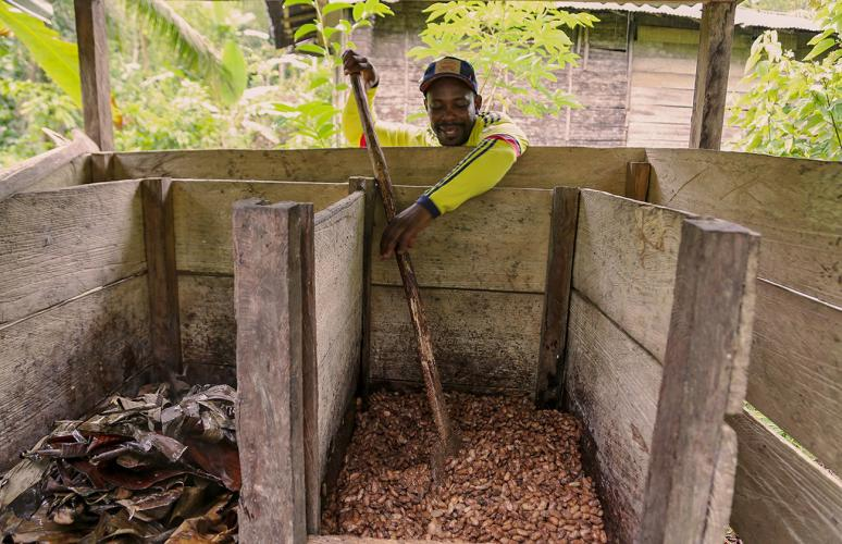 Fidel Palacios shows how cacao beans need to be mixed during the fermentation process. Image by Verónica Zaragovia. Colombia, 2018.